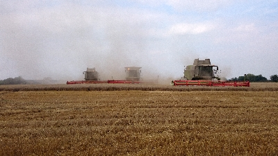 Combine harvesters at work